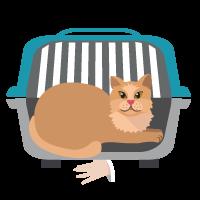 pisica-in-cusca